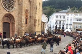 Feira cabalar, gastronomía e cultura danse cita en Mondoñedo nas Quendas 2018