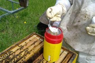 Métodos de detección de la varroa en las colmenas
