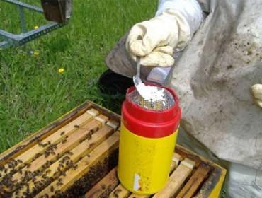 Métodos de detección da varroa nas colmeas