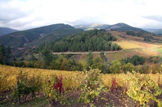 Bodegas Santa Marta: vinos exclusivos desde las laderas de Valdeorras