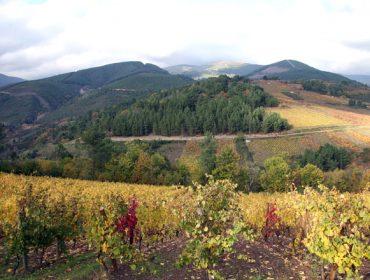 Adegas Santa Marta: viños exclusivos desde as ladeiras de Valdeorras