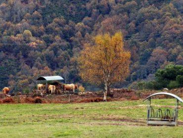 A Xunta propón prorrogar as axudas agroambientais á custa de reducir os apoios á montaña