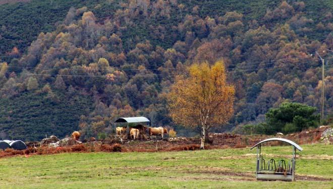 A instalación de comedeiros no exterior permite manter fóra a parte dos animais todo o ano.