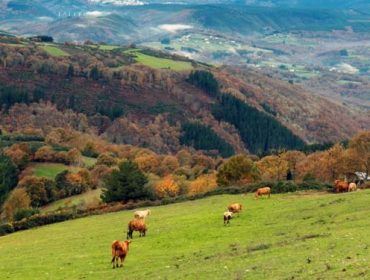 A gandería de vacún de carne urxe apoios para enfrontar a crise