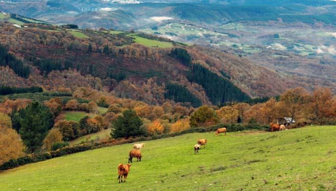 A Deputación de Lugo aproba axudas para o sector  agrogandeiro