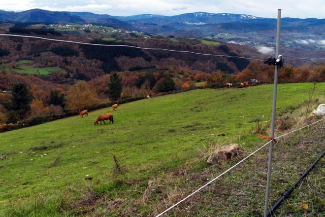 Unións Agrarias advirte de que os gandeiros de Cervantes non cobraron as axudas da PAC 2018