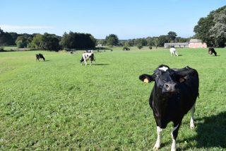 Xornada en Agolada sobre a mellora no manexo do gando bovino de leite e carne