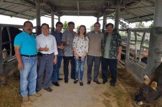 Acruga desenvolve en Indonesia cruces de Rubia Galega con gando autóctono