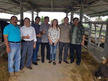 Acruga desarrolla en Indonesia cruces de Rubia Gallega con ganado autóctono
