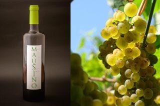 Presentan «Mausiño», el primero vino elaborado a partir de la variedad autóctona gallega Ratiño