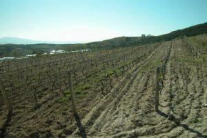 Quinta do Buble vineyard.
