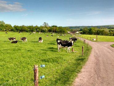 Recomendacións para o pastoreo en vacún de leite