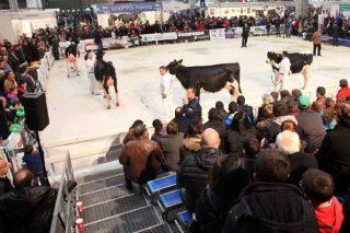 Os concursos de gando de Cimag – Gandagro contarán con 172 animais