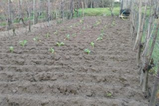 Uns consellos para o cultivo da horta en xaneiro