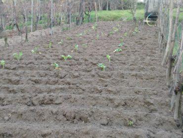 Consejos para el cultivo de la huerta en febrero