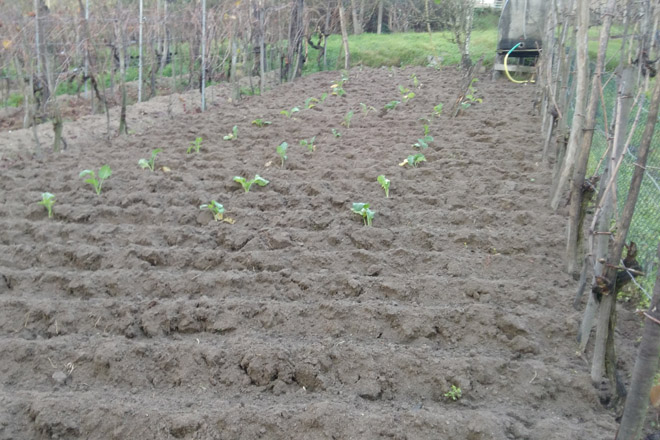 Consellos para o cultivo da horta en xaneiro