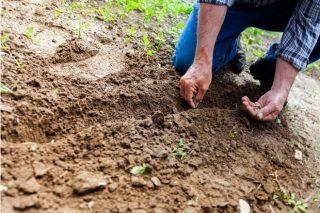 Jornadas de recuperación de semillas tradicionales