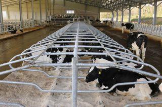 Las arenas Q-bed para cama de vacas optan al premio GrandAgro Innova 2017
