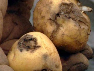 Couza Guatemalteca: Ata polo menos o 2020 non se poderá plantar pataca nas zonas afectadas