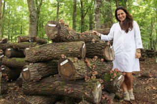 A galega Hifas da Terra, premio Alimentos de España 2016 á Produción Ecolóxica