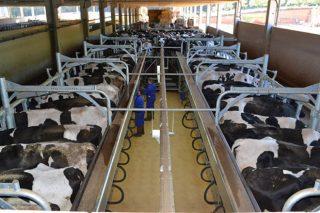 """Curso gratuíto """"Incorporación á empresa agraria, orientación de vacún de leite"""" na provincia de Lugo"""