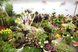 Convocadas as axudas para os productores de flor cortada e planta ornamental
