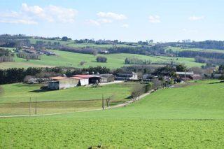 Agricultura proxecta unha normativa de ordenación das granxas de vacún
