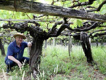 Xirpín: recuperando a tradición vinícola do Barbanza