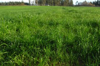 Bisannia primavera: fórmulas de abonado á carta para as pradeiras
