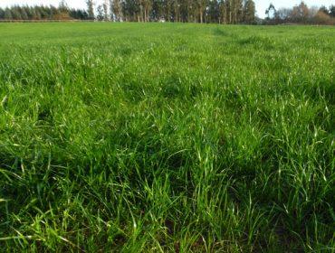 Bisannia Pradeira Primavera: abonado eficaz e eficiente para as pradarías