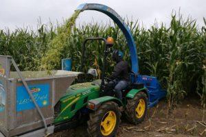 Cultiva Campo de ensaio Dekalb con excelente Stay-Green e Sanidade Vexetal. (Rede de Ensaios Dekalb Cornixa Cantábrica).