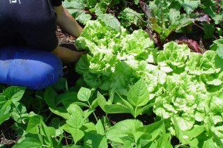 Curso de horta e conservas ecolóxicas