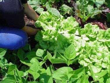 A vermicompostaxe e a compostaxe como fontes de abono para as hortas urbanas ecolóxicas