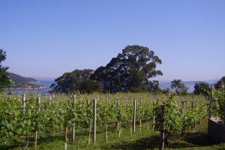 A IXP do viño das Ribeiras do Morrazo entrará en marcha este ano