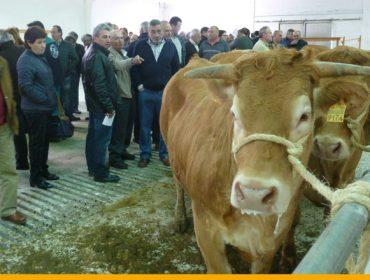 Media de 2.100 euros na poxa de Acruga en Becerreá