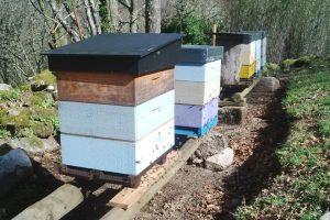 adro Dadant (un chisco maior cun Langstroth) con cera construida polas abellas seguindo a técnica proposta