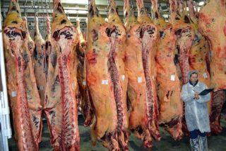 Webinar sobre diagnóstico de calidade da carne a través da ecografía