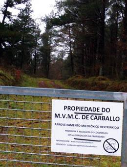 Potencialidade dos cogumelos nas comunidades de montes veciñais