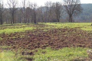 Medio Ambiente valora cederlle ós gandeiros xaulas trampa para a captura de xabaríns