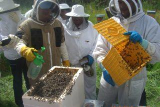 Programa de formación apícola da EFA Fonteboa