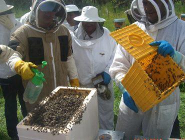 Programa de formación apícola de la EFA Fonteboa
