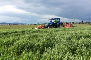 Campaña de ensilado de herba 2018: menos cantidade e de menor calidade