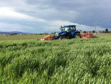 Campaña da herba 2017: menos cantidade pero mellor calidade