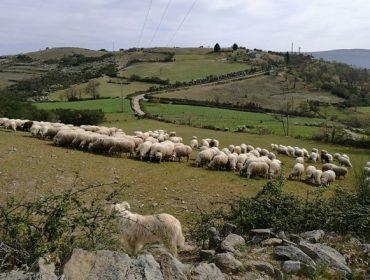 Medra a preocupación no agro galego pola falta de choivas