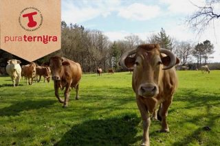 'Pura tenrura, pura ternera', nova campaña promocional de Ternera Gallega