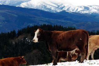 Ganadería Fonchave, diversificación en la montaña lucense