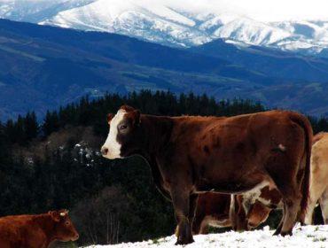 Gandería Fonchave, diversificación na montaña lucense