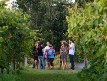 Fin de semana para gozar das xornadas de portas abertas nos Roteiros dos  Viños de Galicia