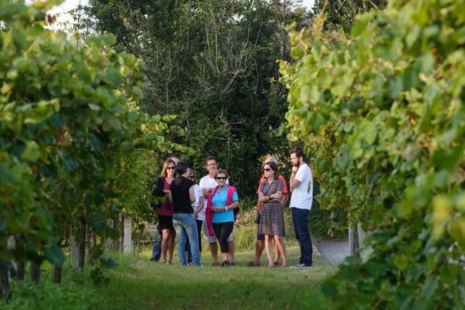 Xornadas de portas abertas das rutas dos viños nas 5 Denominacións de Orixe de Galicia