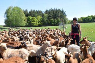 Cabuxa Natur: carne de cabrito de Raza Galega con 0% de penso